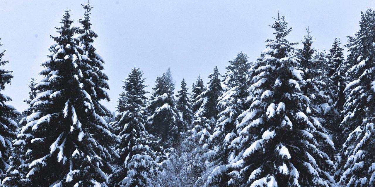 https://www.meritogroup.com/wp-content/uploads/2020/01/Pine-Trees-1280x640.jpg