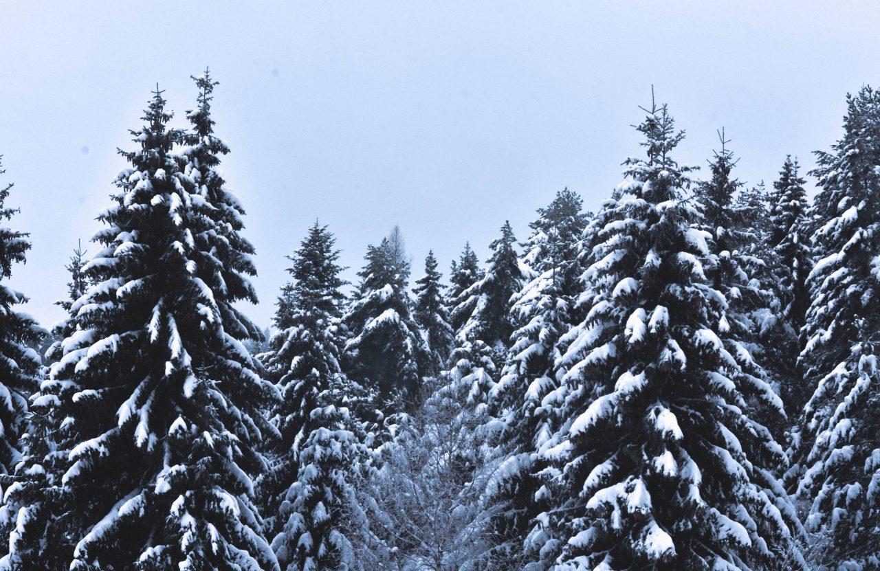 https://www.meritogroup.com/wp-content/uploads/2020/01/Pine-Trees-1280x831.jpg